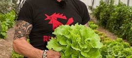 maffay-salat